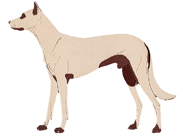 hond_atopie_groot
