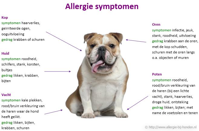 Allergie symptomen hond