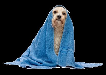 hond allergie zwemmen nat