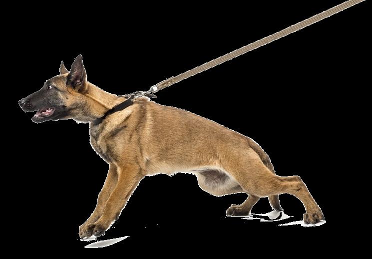 hond trekt