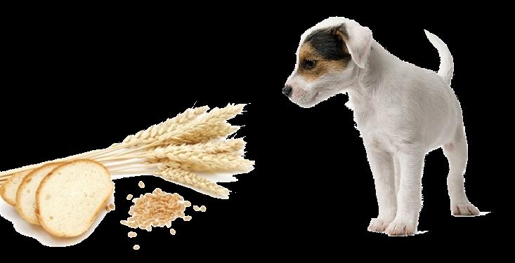 Glutenallergie granenallergie hond