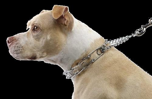 prong-collar