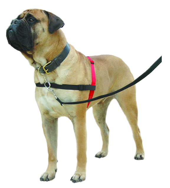 halti harness vrij tuig hond
