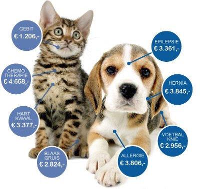 tarieven dierenarts