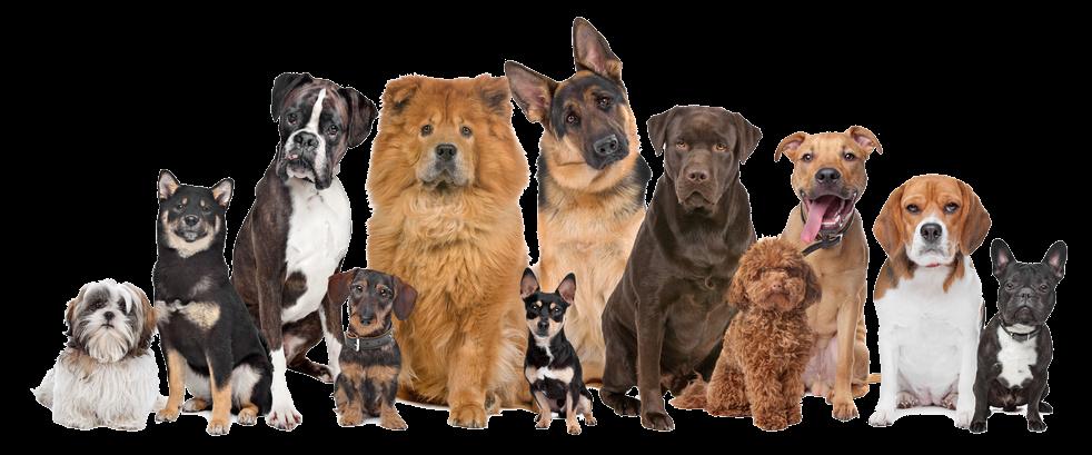 vaccinatie honden